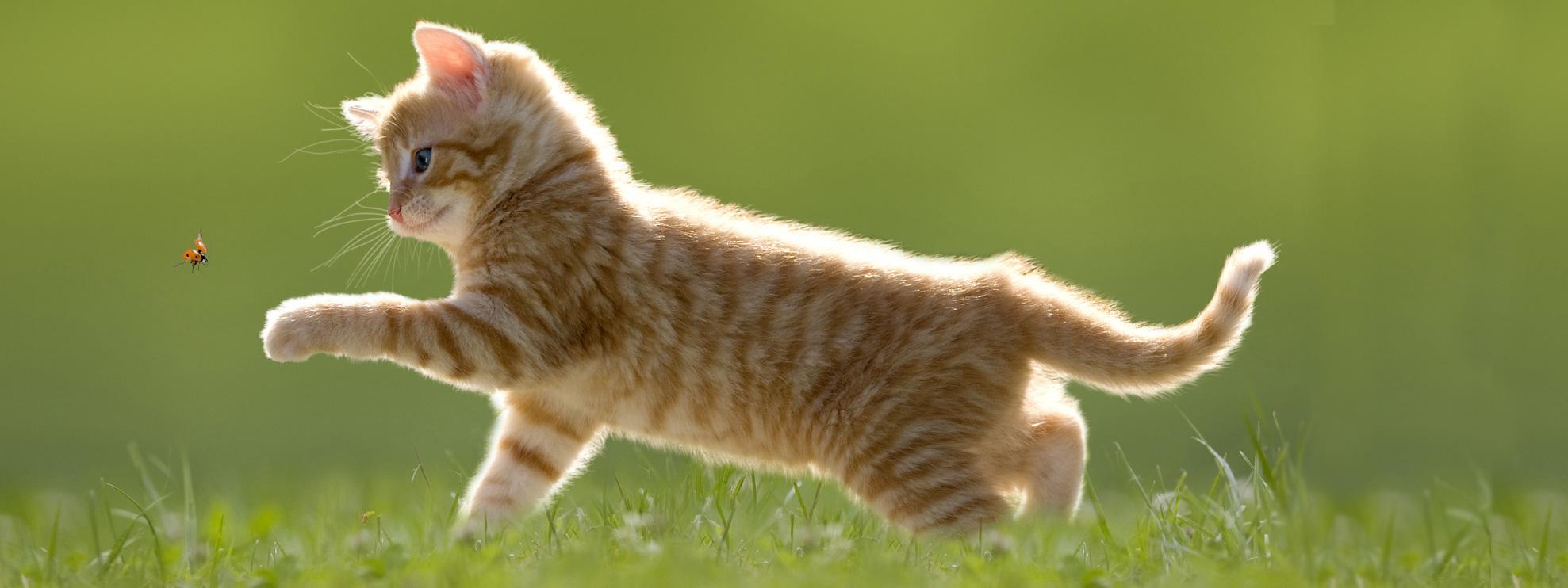 Lo Sguardo …il gatto – Il Cammino dei Tre Sentieri
